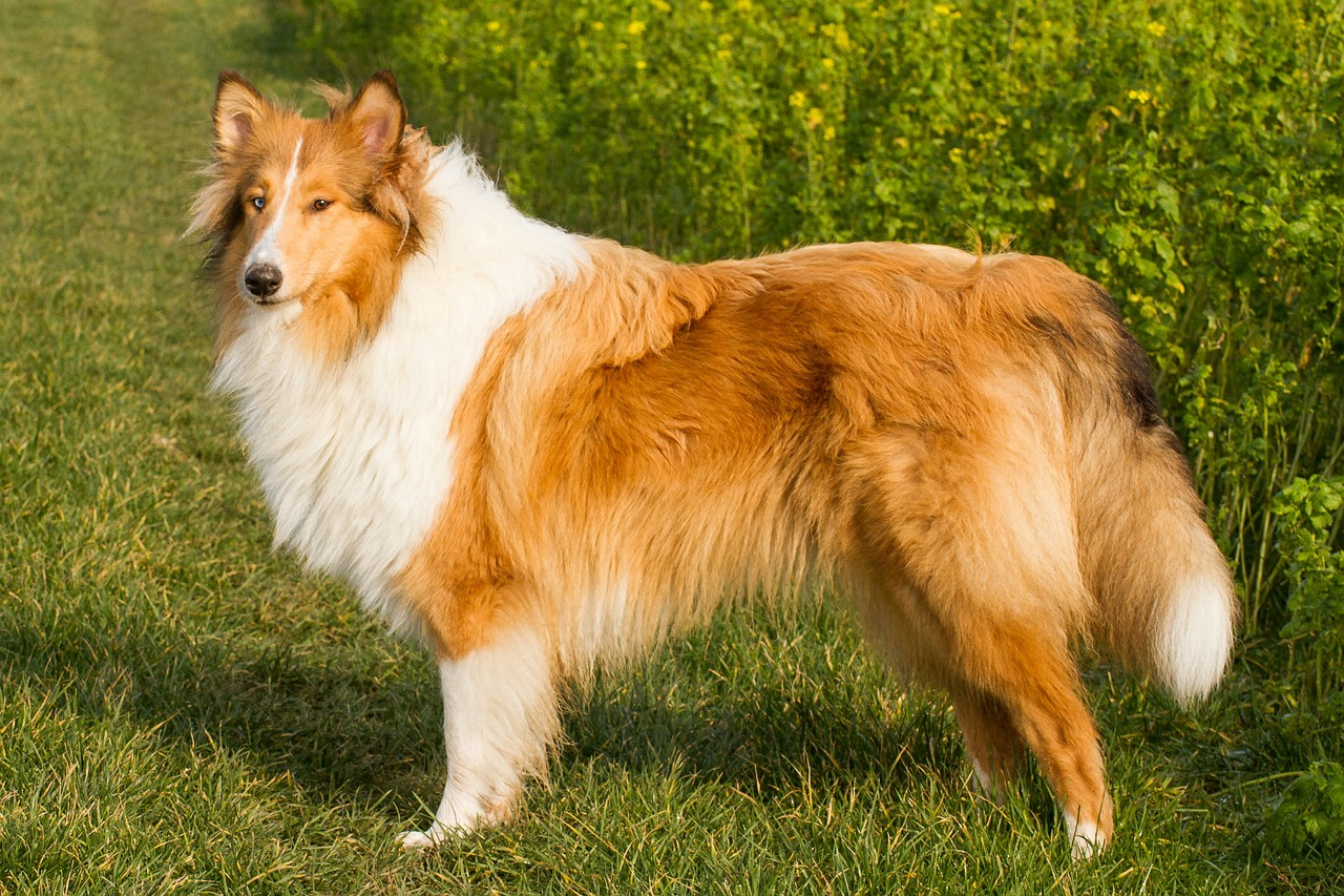 What Are Big Breeds Of Dogs